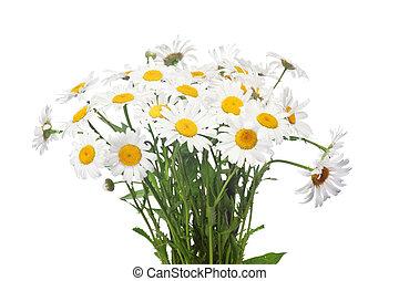 kwiat, chamomile, abstrakcyjny, tło.