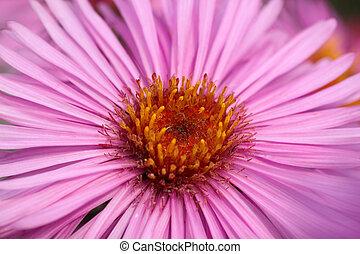 kwiat, do góry szczelnie