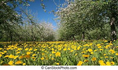 kwiat, jabłko, ogród