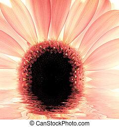 kwiat, odbicie, światło słoneczne, woda, za, szczelnie-do góry