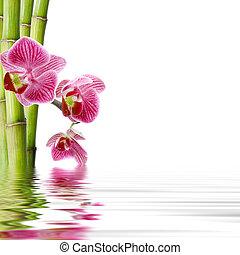 kwiat, odbicie