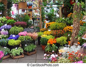 kwiat robią zakupy