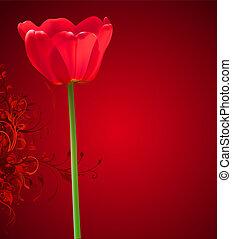 kwiat, tło., ilustracja, valentine, tulipan, wektor, dzień, czerwony