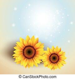 kwiat, tło