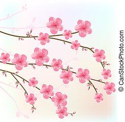 kwiat, wiśnia, karta