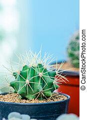 kwiat, wizerunek, do góry szczelnie, kaktus, garnek