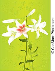 kwiatowy, lilie, tło