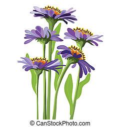 kwiatowy, purpurowy, wektor, aster, projektować