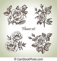kwiatowy, set., ręka, róże, ilustracje, pociągnięty