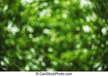 kwiatowy, zielony, bokeh, kasownik, tło