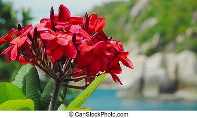 kwiaty, breeze., kwiat, trzęsie się, ruszać się w jedną i ...
