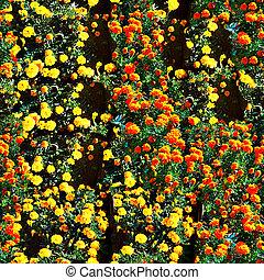 kwiaty, kasownik