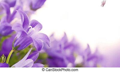 kwiaty, na, niejaki, białe tło, ciemny