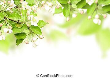 kwiaty, od, jabłko