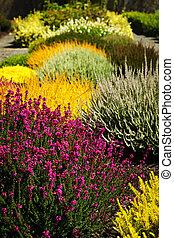 kwiaty, ogród, barwny