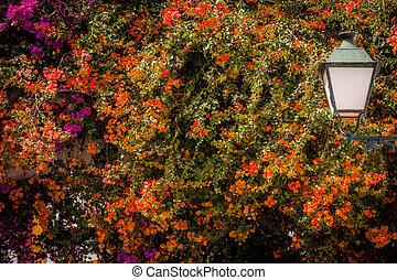 kwiaty, streetlamp, barwny