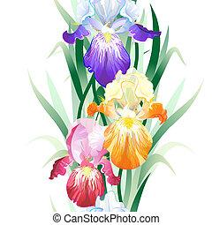 kwiaty, tło, seamless, wektor, irys