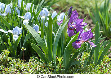 kwiaty, w ogrodzie