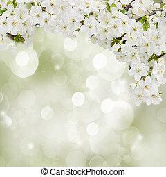 kwitnąc, śliwka, kwiaty, w, ogród
