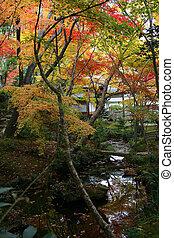Kyoto autumn creek