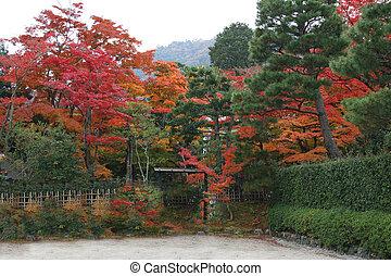 Kyoto autumn trees