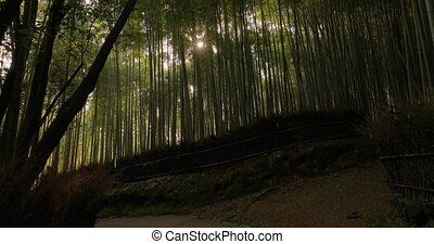Kyoto Bamboo Forest - Bamboo forest in Kyoto, Japan, sun ...