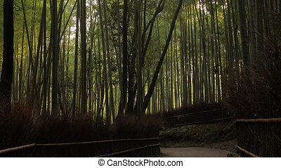 Kyoto Bamboo Forest - Bamboo forest in Kyoto, Japan, ...