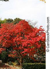 Kyoto fall tree