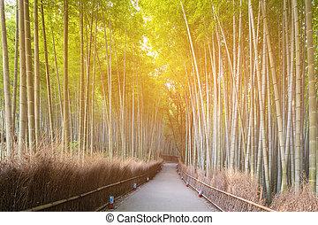 Japan Bambuswald Kyoto Forest Japan Bambus Kyoto