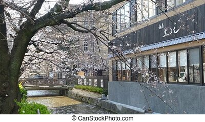 KYOTO, JAPAN - March 28, 2015: Cherry blossom on river side ...