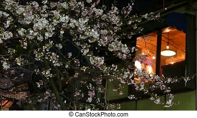KYOTO, JAPAN - March 28, 2015: Cherry blossom on river side...