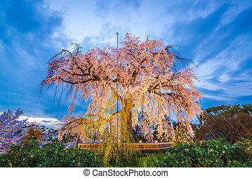 Kyoto Spring Park