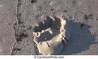 lábnyom, elhagyott, tengerpart, tenger