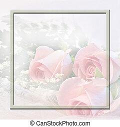 lágy, rózsaszín rózsa