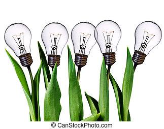 lámpara, bombilla, tulipanes