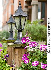lámpara, florecer, petunia, jardín, clásico