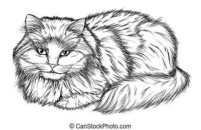 lápis, gato, pretas, branca, desenho, mentindo