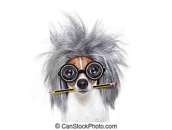 lápis, inteligente, cão, esperto