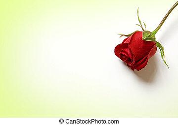 láska, můj, nitro, růže