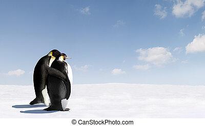 láska, tučňák