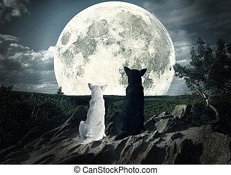 látszó, kutyák, két, hold