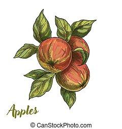 läßt drei, zweig, äpfel