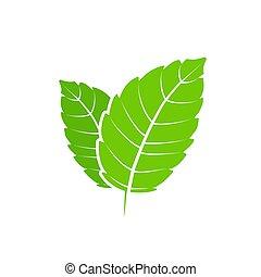 lägenhet, aroma., natur, hälsosam, mentol, leaf., vektor, grön, det leafs, herbal, frisk, mynta, plant., grönmynta