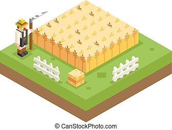 lägenhet, isometric, vete, äng, symbol, illustration, fält, lie, vektor, design, bakgrund, bonde, 3, ikon