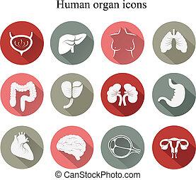 lägenhet, sätta, vector., icons., mänsklig, organs