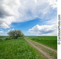 ländliche straße, unter, trüber himmel, mit, baum