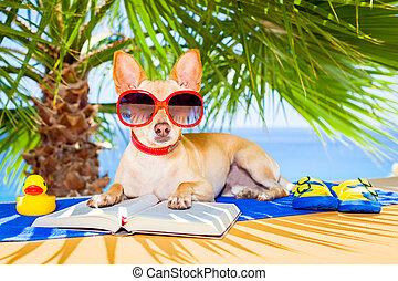 läsning, hund