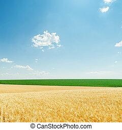 lätt, skyn, och, fält, med, gyllene, skörd, och, grön,...
