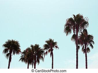 lång, palm trä