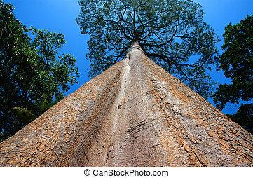 lång, träd